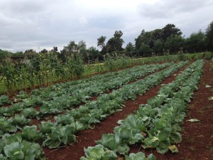 Agrorcological farm outside Havana, Cuba