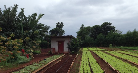 Agroecological farm outside Havana, Cuba. Credit: Quincey Tompkins Imhoff