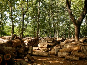 Piles of teak logs, Java, Indonesia. Credit: CIFOR  ©Center For International Forestry Research/Murdani Usman