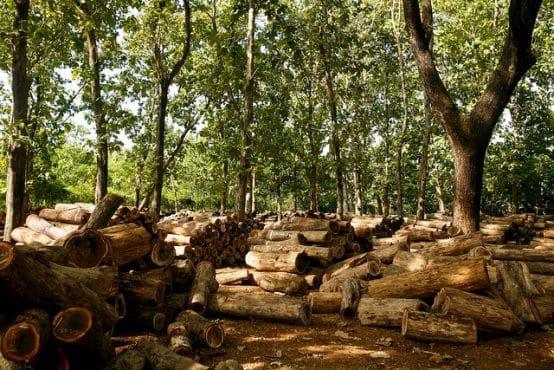 Piles of teak logs, Java, Indonesia. Credit: CIFOR  ©Center For International Forestry Research/Murdani Usman
