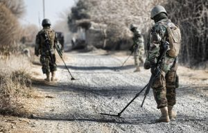 Members of the Afghan National Army search a road for improvised explosive devices.